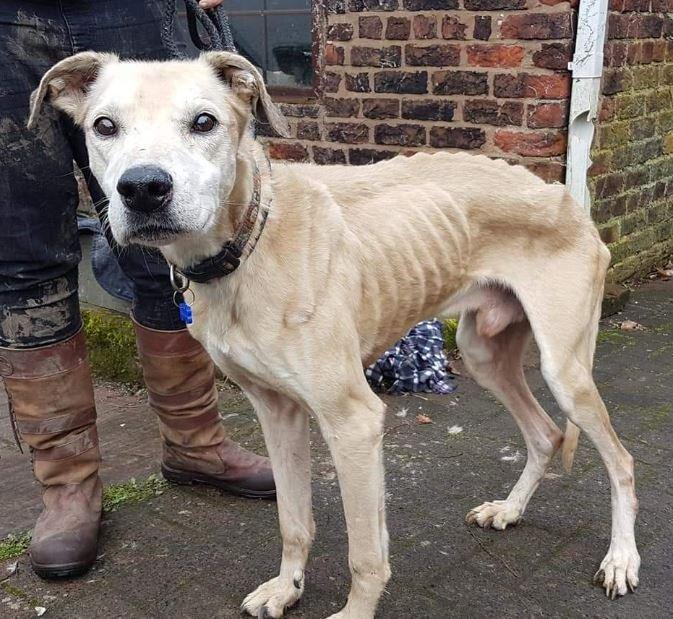 malnourished dog