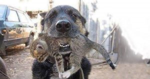 brave dog rescuing kitten