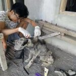 Guy Finds Abandoned Skin and Bones Husky And Helps It Recover 3