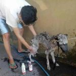 Guy Finds Abandoned Skin and Bones Husky And Helps It Recover 4