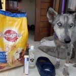Guy Finds Abandoned Skin and Bones Husky And Helps It Recover 7