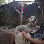 Guy Finds Abandoned Skin and Bones Husky And Helps It Recover 9