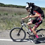 cyclist carried a dehydrated dog