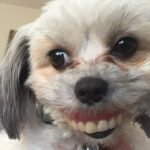 Maggie with dentures