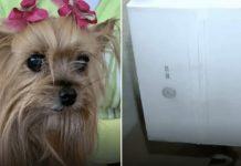 FedEx package killed the dog