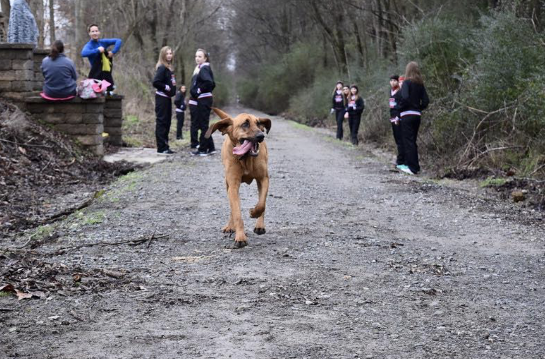 Dog Accidently Joins Half Marathon