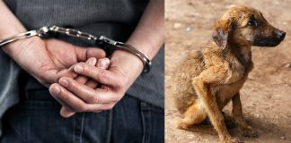 Prison Sentences For Animal Cruelty