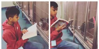 Boy Reads to Shelter Dogs