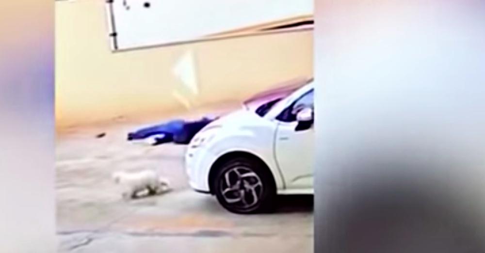 dog was saved
