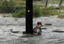 Abandon Dogs In Natural Disasters