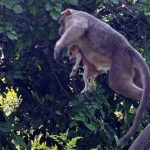 monkey-adopts-puppy-in-india_5
