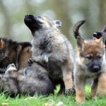 people-can-now-adopt-dogs-who-failed-government-training-for-being-too-friendly-03
