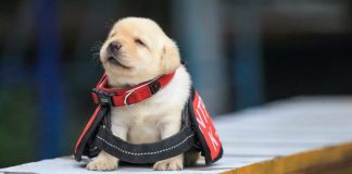 Dogs Failed Government Training For Being Too Cute Are Up For Adoption