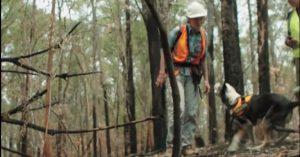 Dog Helps Rescue Koalas
