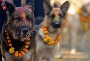 Dog festival in Nepal