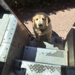 ups-drivers-meets-animals-dogs-5dfb32d20c053__700