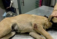 poisoned dogs in egypt