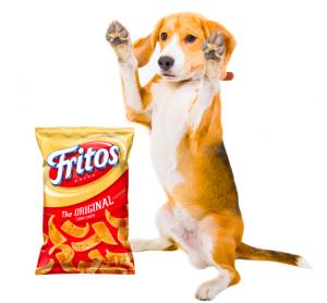 dog's feet smell like corn chips