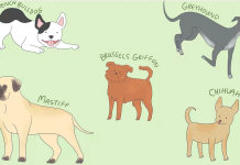 Low-Maintenance Dog Breeds