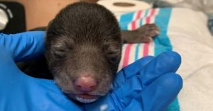 orphaned bear