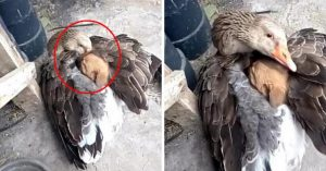 Goose Saves Stray Puppy