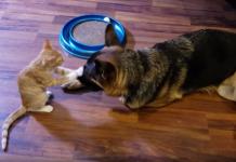 dog and kitten friendship