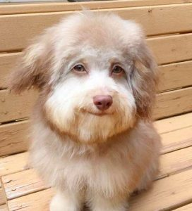 Dog with a human face