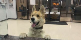 dog reporting himself missing in police station