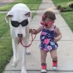 deaf great dane and his best friend