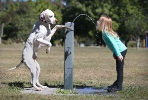 Human-Animal Friendships