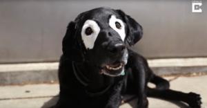dog with Vitiligo