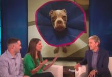 Ellen's Show