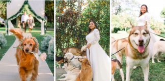 dogs attending owners' wedding