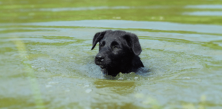 Blue-Green Algae In Lakes Is Killing Dogs