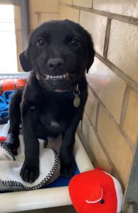 Puppy Smiling At Everyone