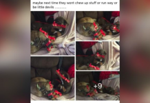 A Man Taped Up His Dogs And Posted Photos To Facebook