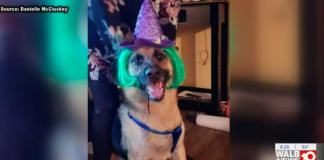 vet refused to take german shepherd