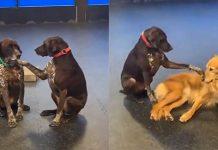 Dog Insists On Petting